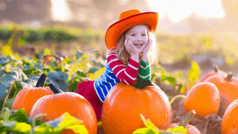 Child pumpkin picking in a pumpkin patch